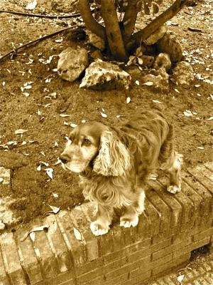 El perro que me enseñó lo que es ser feliz pidiendo muy poco